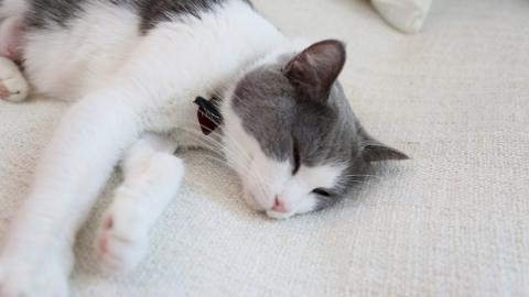 Meet the Cats of D.C.'s First Cat Cafe