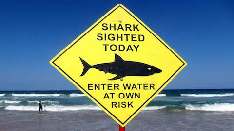 Australia Shark Attacks Could Take Bite Out of Tourism