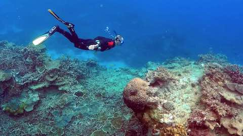 Australia's Great Barrier Reef Suffers Extreme Coral Die-Off
