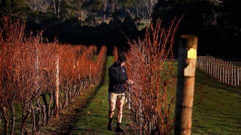 Australian Wine Exports To China Soar