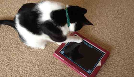 Pets | Cats: Games to Download for Your Cat