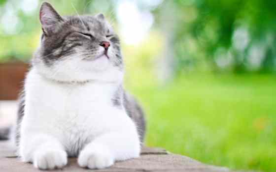 Pets | Cats: How Cats Show Their Happiness