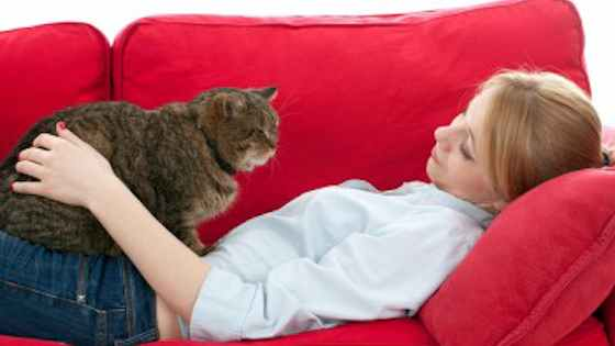 Pets | Cats: Is It Too Late to Train Your Senior Cat?