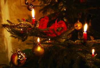 Christmas Trees and Manger Scenes