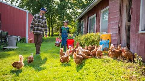 Common Myths About Raising Poultry