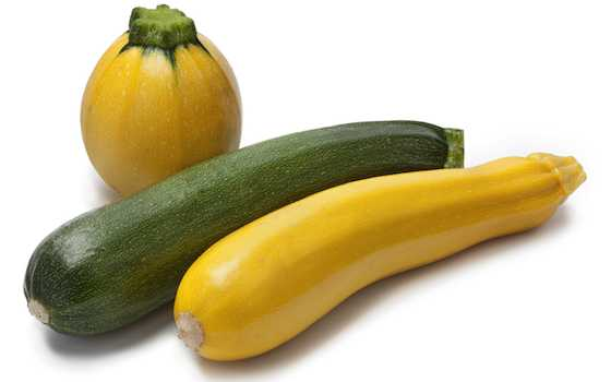 Cook Up That Abundance of Summer Squash Recipe