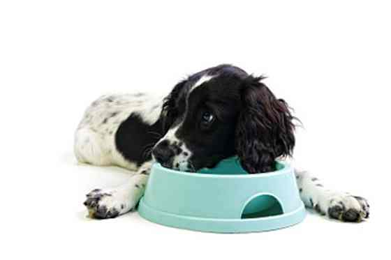 Pets | Dogs: Does Your Dog Eat Too Fast?