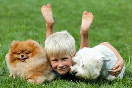 Pets | Dogs: Send Your Kid to Dog Training Camp