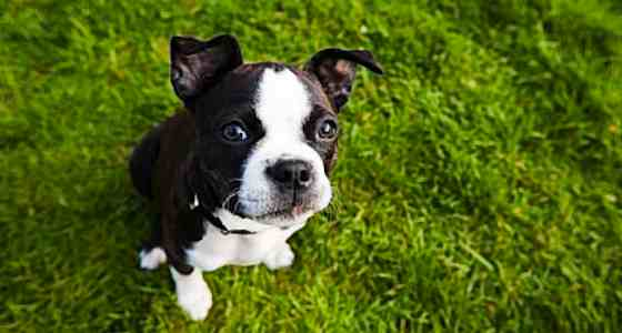 Pets | Dogs: 4 Simple Steps to Stop Dog Jumping