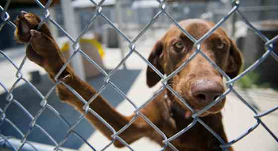 Pets | Dogs: Breed Rescue Groups: Saving Dogs in Need of Homes