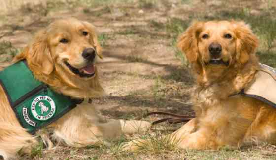 Pets   Dogs: Canine Healers: Visiting With a Therapy Dog