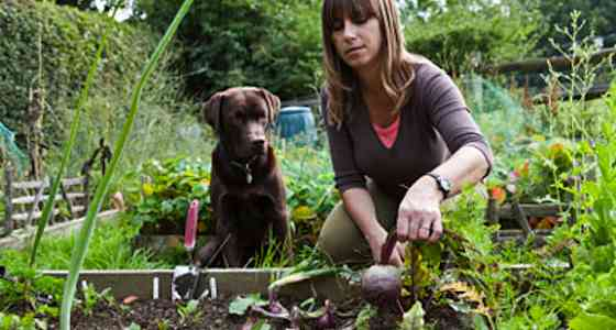 Pets | Dogs: Dog Lovers: You Too Can Have a Garden!