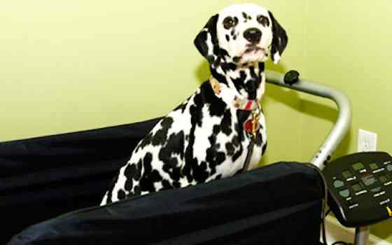 Pets | Dogs: Dog Treadmills: Safe or Hazardous?