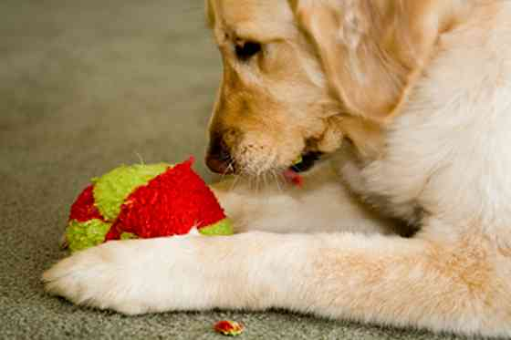 Pets | Dogs: Dog-friendly Spring-cleaning: A How-to Guide