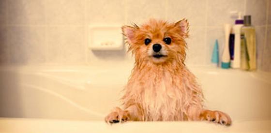 Groom Your Dog Like a Pro