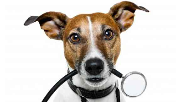 Pets | Dogs: How to Manage Your Dog's Health Care