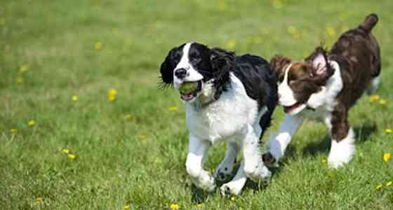 Pets | Dogs: How to Plan a First-class Puppy Playgroup