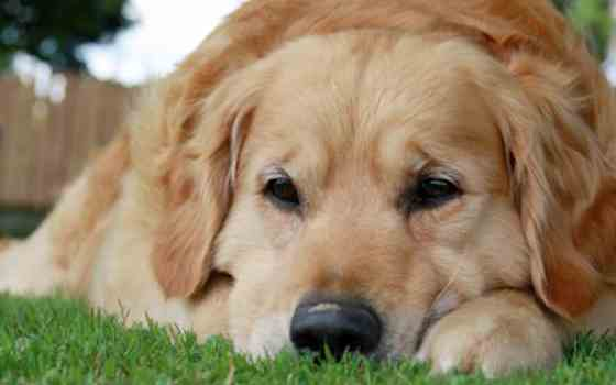 Pets | Dogs: How to Read Your Dog