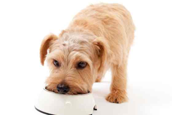 Pets | Dogs: Is Your Dog Getting the Right Nutrients?