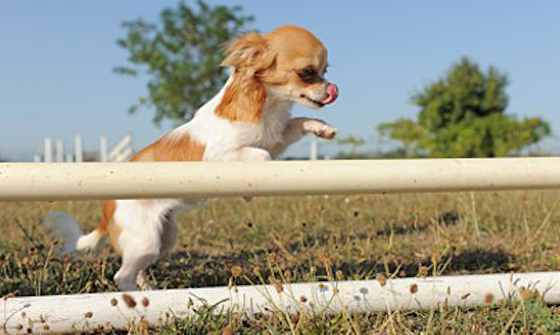 Pets | Dogs: Is Your Puppy Ready for Sports?