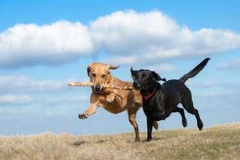 Know Your Dog Park Etiquette