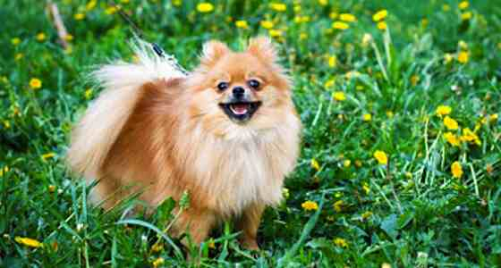 Pets | Dogs: Minimize the Shedding: Essential Springtime Dog-grooming Tips