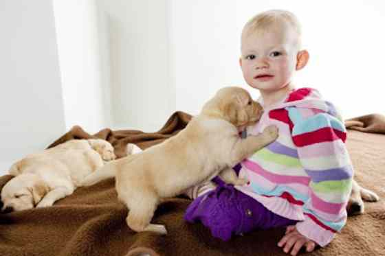 Pets | Dogs: Puppy Socialization: A Trainer's Top Tips