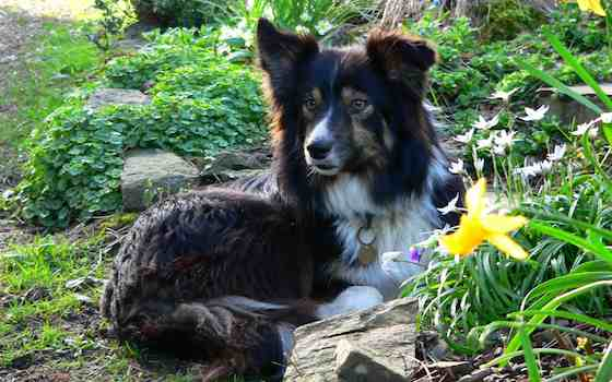 Teach Your Dog to Enjoy Your Garden Without Destroying It