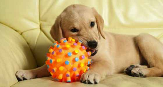 Pets | Dogs: Are Tennis Balls Safe for Your Dog?
