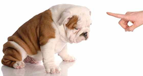 Pets | Dogs: When Should You Tell Your Dog 'No'?