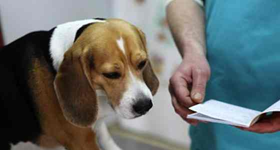 Pets | Dogs: Why Your Dog Needs Vaccinations