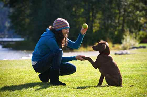 Pets | Dogs: 13 Easy Tricks to Teach Your Dog Commands