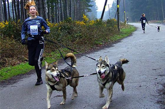 Pets | Dogs: Canicross: An Easier Way to Run With Your Dog