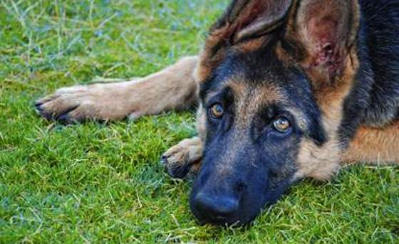 Pets   Dogs: Dog Heroes in Need of Homes