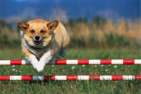 Pets | Dogs: Find the Right Sport for Your Dog