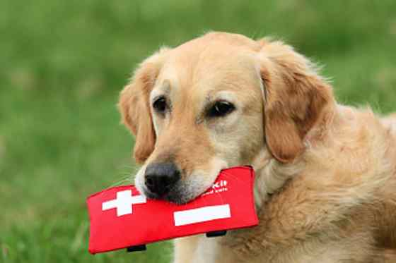 Pets | Dogs: Is Your Dog's First Aid Kit Complete?