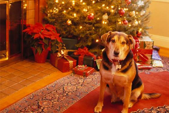 Pets | Dogs: How to Keep Your Pet Safe During the Holidays