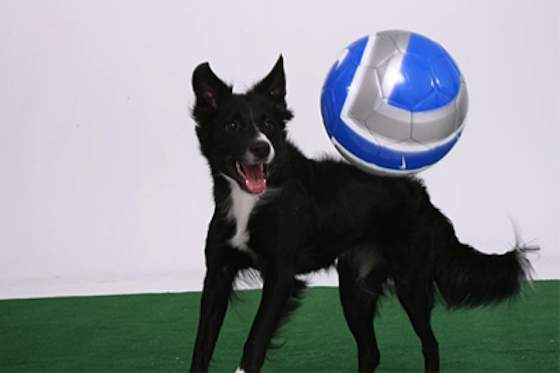 Pets   Dogs: How to Play Soccer With Your Dog