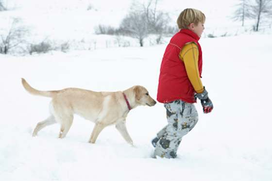 Pets | Dogs: Keep Your Dog Warm in the Winter