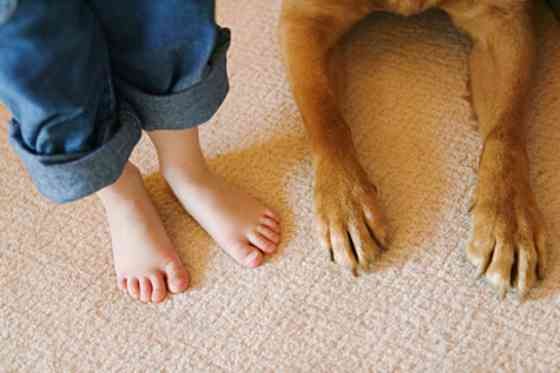 Pets | Dogs: My Dog Is My Peace: An Autistic Boy's Story