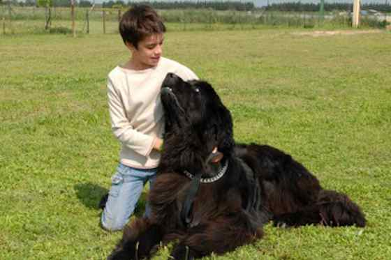Pets | Dogs: Newfoundlands: The Dog for Gentle People