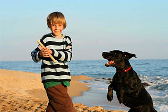 Pets | Dogs: Teach Your Dog to Fetch