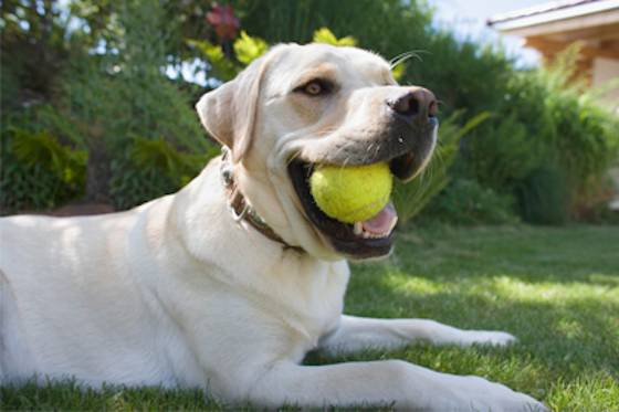 Pets | Dogs: The Best Games to Play With Your High-Energy Dog