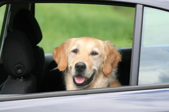 Pets | Dogs: The Best Way for Your Dog to Ride in the Car with You