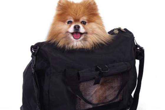 Pets | Dogs: Tips to Keep Your Dog Safe While Flying