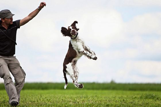 Pets | Dogs: What Is Freestyle Dancing With Dogs?