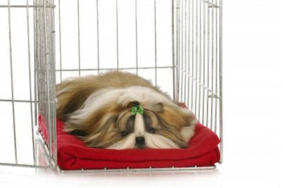 Pets | Dogs: Should You Crate-train Your Puppy?