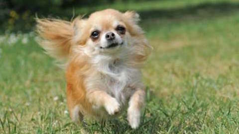 Pets | Dogs: Exercise and the Small Dog