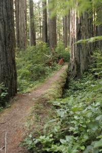 Crater Lake National Park offers many hiking trails. Exploring the Pacific Northwest Seattle, Washington State's National Parks & the Oregon Coast - Cindy Ross World's Fare
