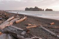 The bleached bones of trees polished by the Pacific Ocean. Exploring the Pacific Northwest Seattle, Washington State's National Parks & the Oregon Coast - Cindy Ross World's Fare